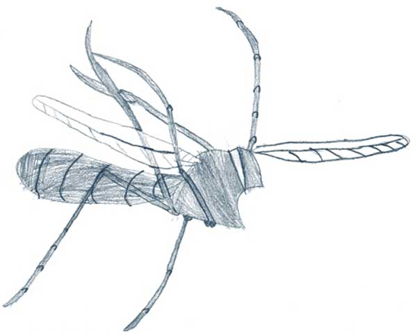 Visual Arts: Insect drawings - Jamie